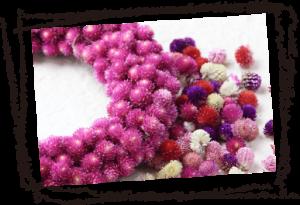 ドライフラワー商品の中でも、センニチコウは生産からドライ加工、販売まで一貫して行っております。